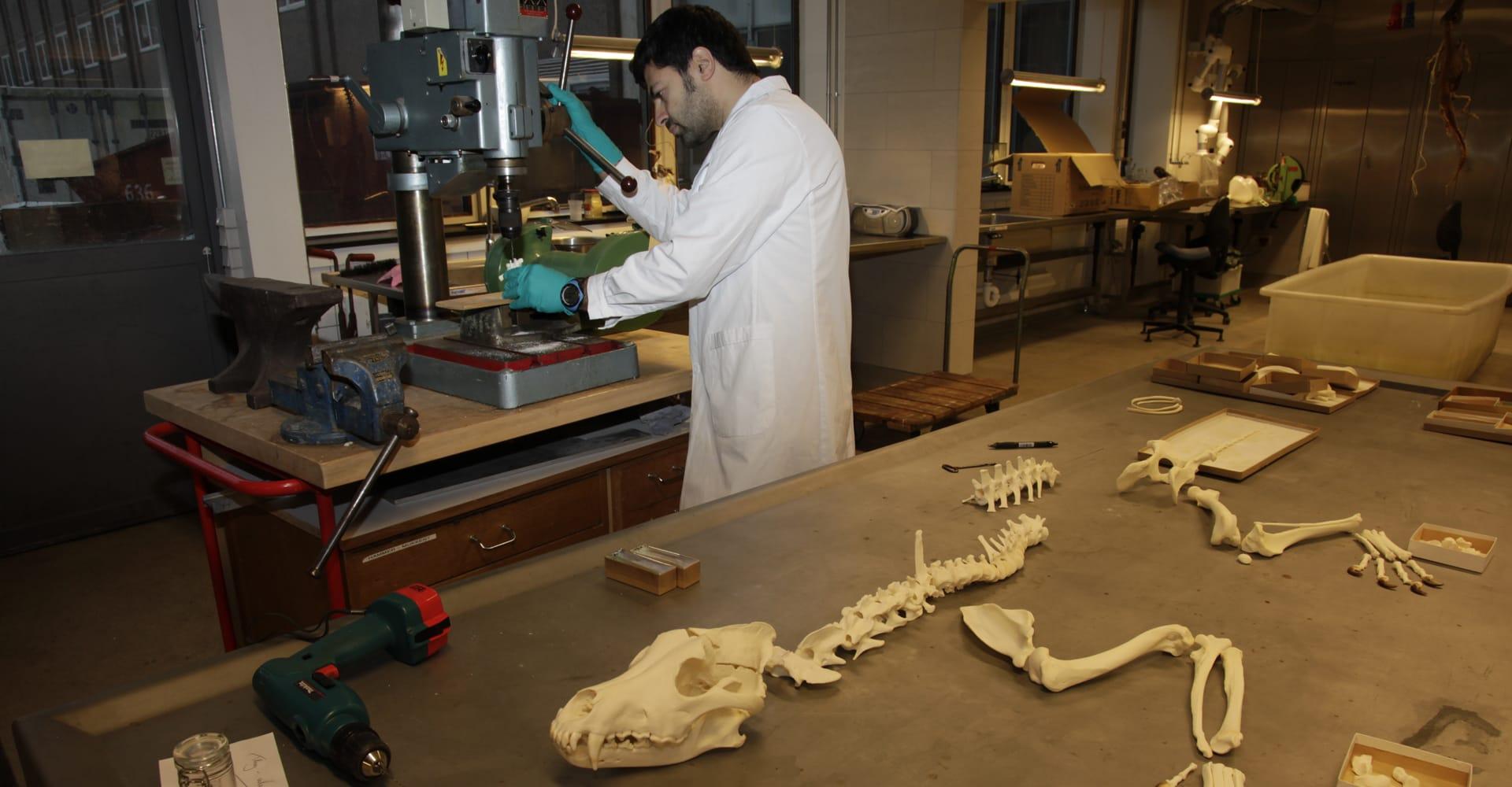 nkf-test-af-skelet